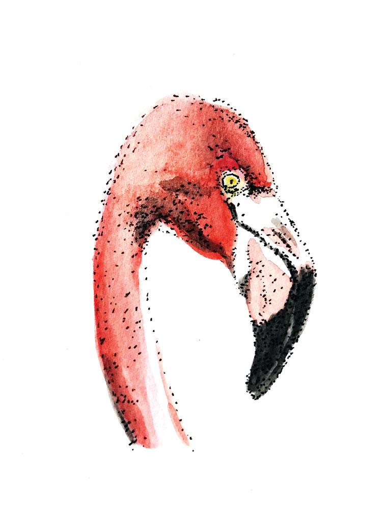 Pointillisme, dessin d'un flamant rose réalisé au stylo à l'encre de Chine et à l'aquarelle par Christophe Moulinier.
