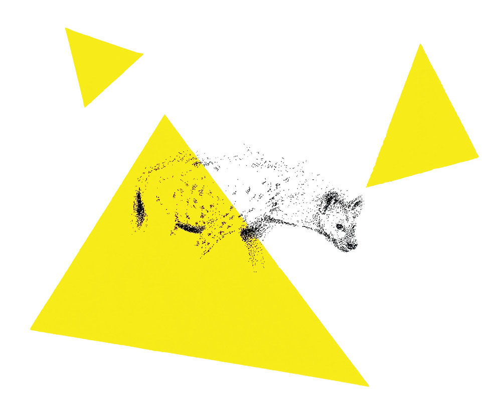 Pointillisme, dessin d'une hyène réalisé au stylo à l'encre de Chine et à l'acrylique par Christophe Moulinier.