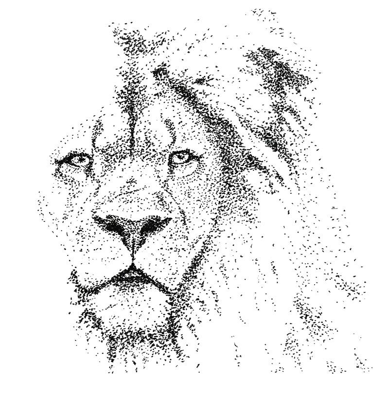 Pointillisme, dessin d'un lion réalisé au stylo à l'encre de Chine par Christophe Moulinier.